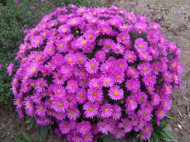 Awesome Pink Aster Flower Bouquet