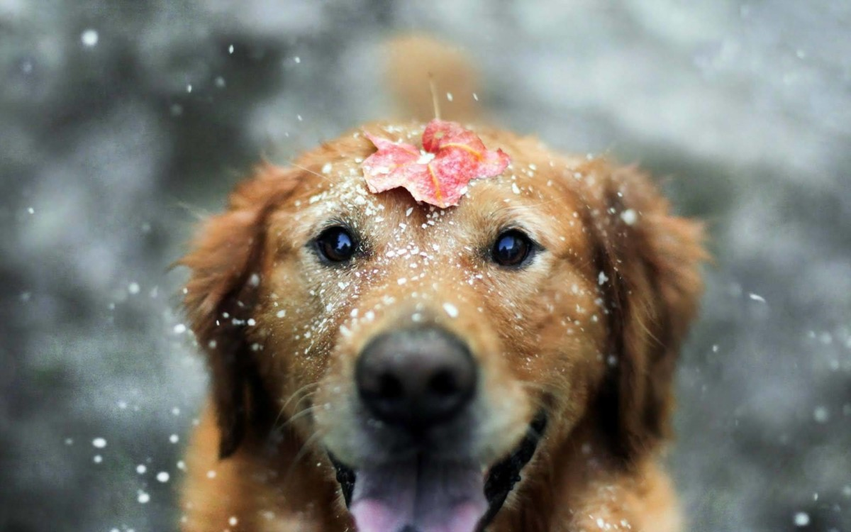 65 Very Cute Dog WallpaperImagesPicsPhotosSnapsPictures In HD
