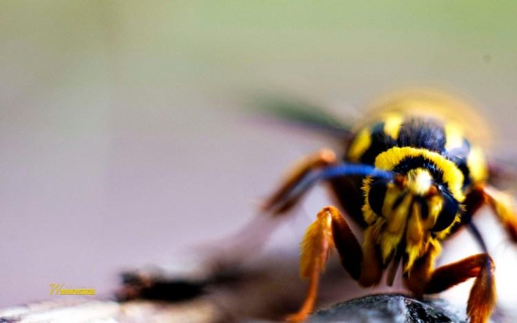 beautiful-insect-close-of-yellow-full-hd-wallpaper