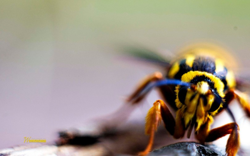 beautiful-insect-close-of-yellow-full-hd-wallpaper