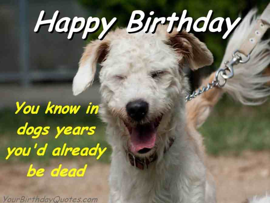 Funny Dog Meme Happy Birthday : Best funny birthday wishes for boy girl aunt