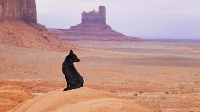 Black Dog In The Vast Deserts Hd Wallpaper
