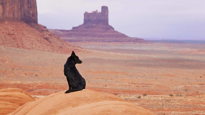 Black Dog In The Vast Deserts Hd Wallpaper