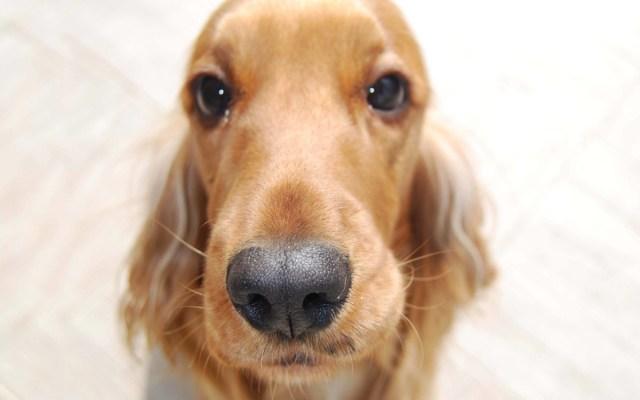 Cute Beautiful Dog 4k Wallpaper