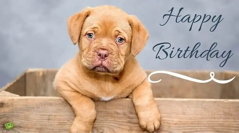Cute Dog Wishes Happy Birthday Picture