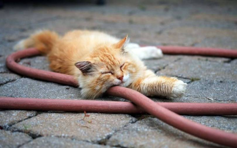 Cute Sleeping Cat Next To Hosepipe 4K Wallpaper