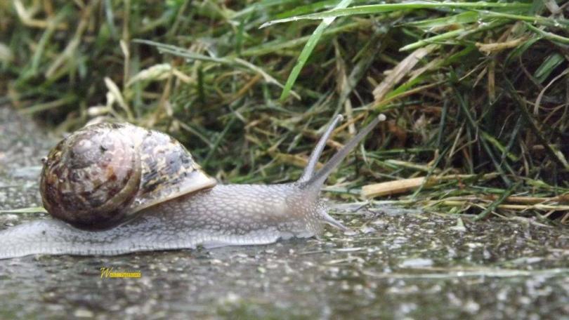 Cute Snail In Bushes Hd Wallpaper