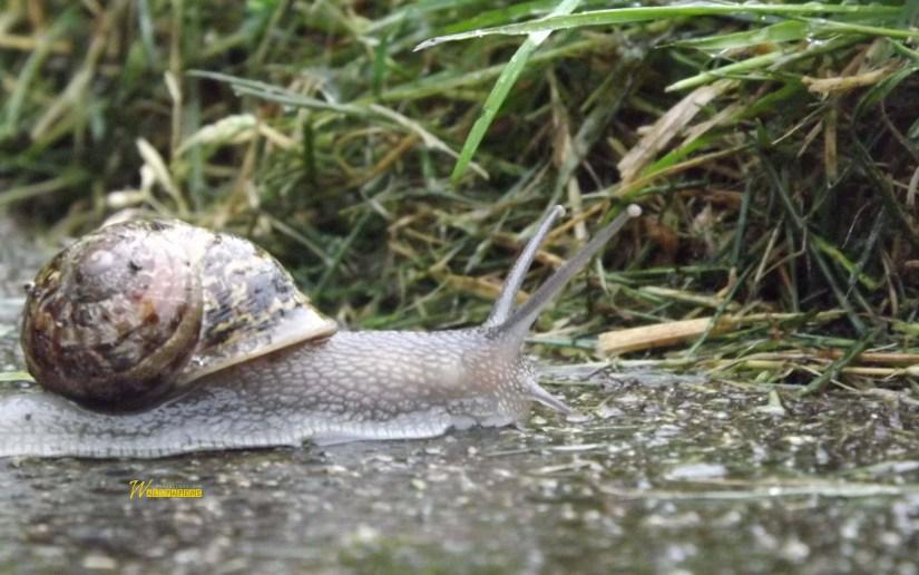 cute-snail-in-bushes-hd-wallpaper