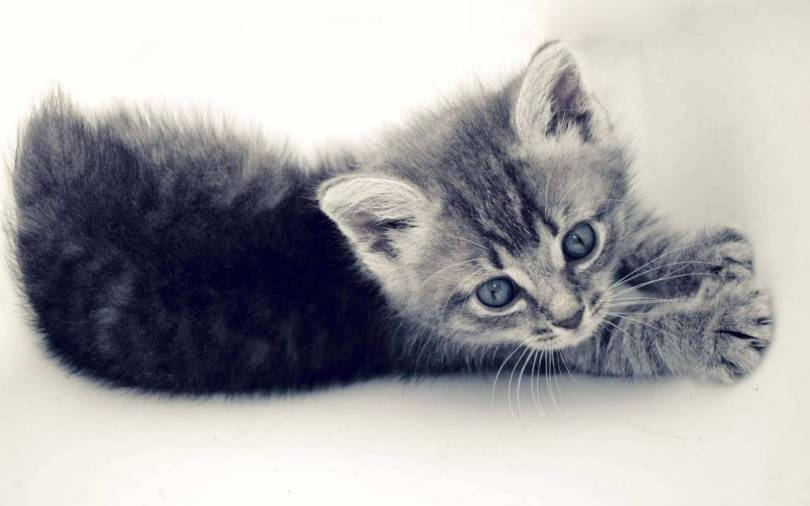 Cutest Small Cat Play HD Wallpaper