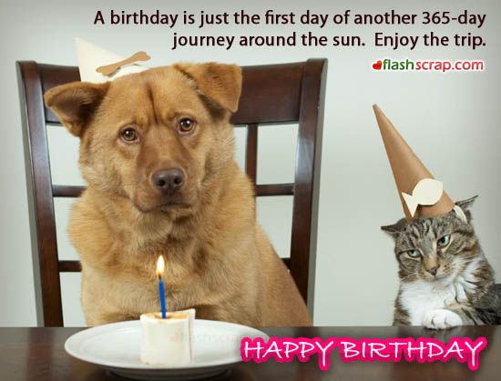 Dog Cat Wishes Happy Birthday