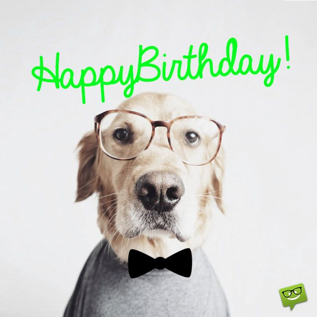 Dog Funny Happy Birthday Wishes