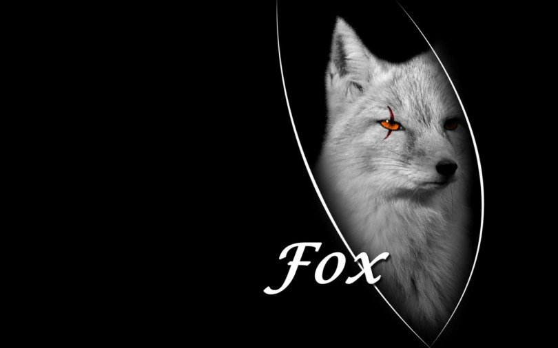 Fox On A Beautiful Black Background 4k Wallpaper