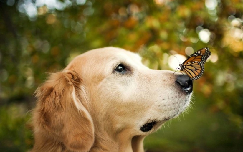 Funny Dog With A Beautiful Butterfly Full Hd Wallpaper