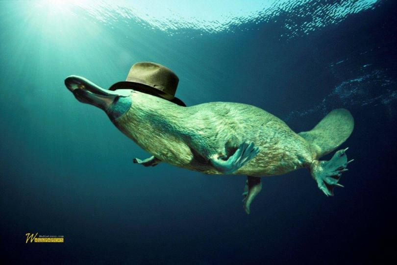 Funny Sea Creature Underwater Full Hd Walpaper