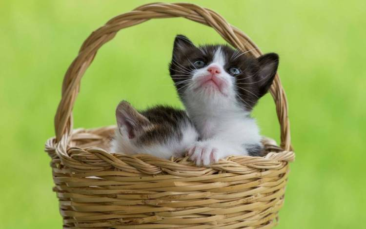 Funny Two Beautiful Cats In A Basket 4K Wallpaper