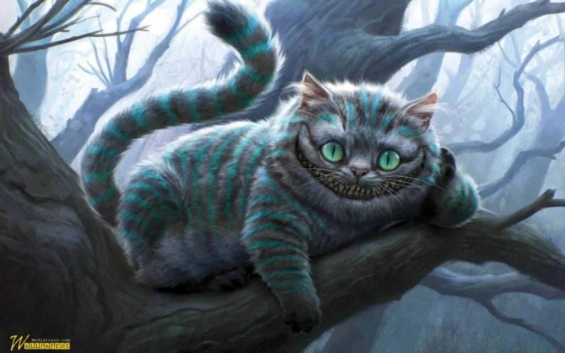 Funny Wallpaper For A Cat Full Hd Wallpaper