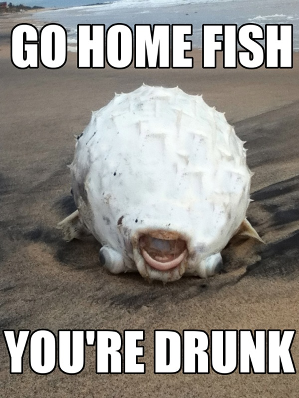 Go Home Fish Youre Drunk Meme