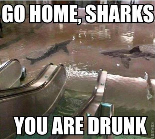 Go Home Sharks You Are Drunk Drunk Meme