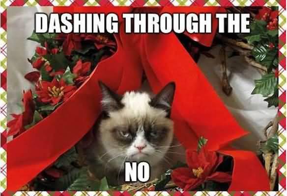 Grumpy Cat Memes Dashing Through The No Photograph