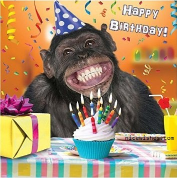 Happy Birthday Funny Monkey Meme Wishes