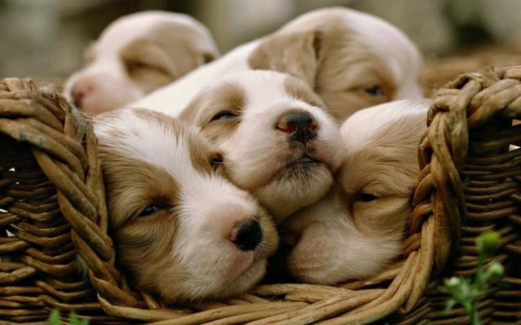 Many Cute And Funny Dogs Full Hd Wallpaper