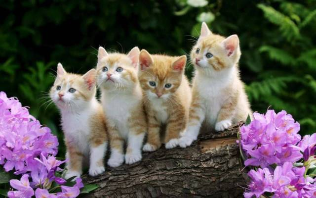 Most Cutest Four Of The Beautiful Cats Next To Flowers 4K Wallpaper
