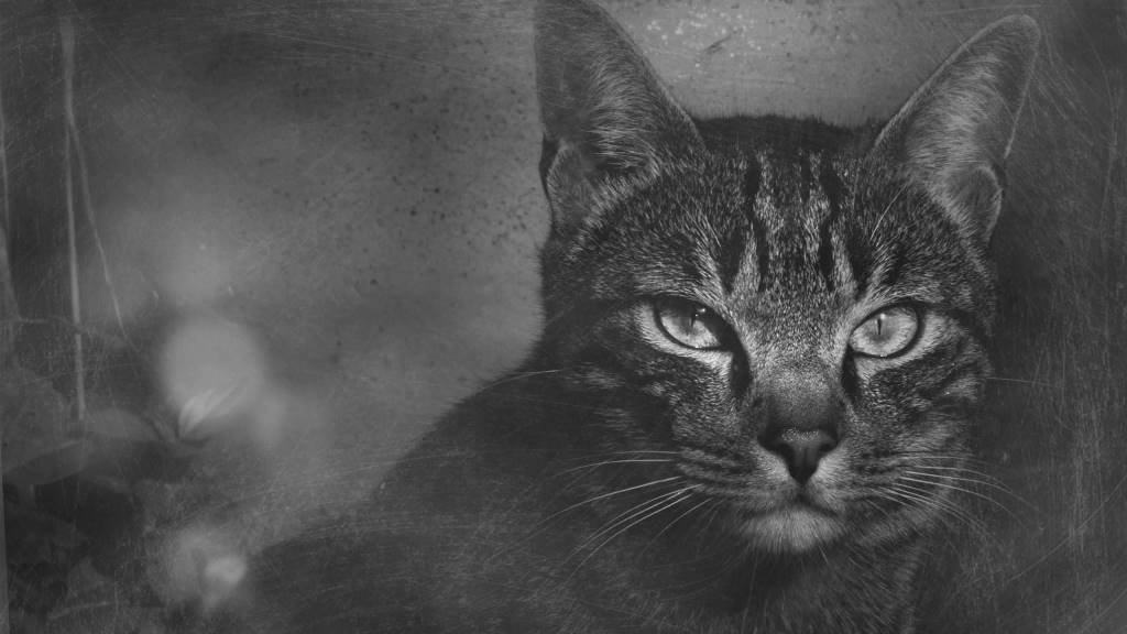 33 incredible Cat Wallpaper In 4K, HD, Full Hd For Desktop ...