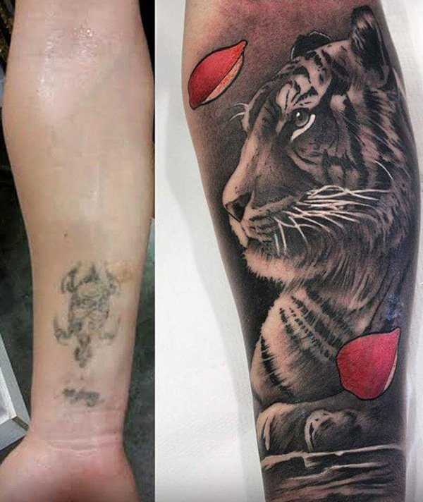 Most Trending Tiger Cover Up Tattoo With Colourful Ink For Man And Woman