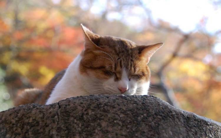 Most Wonderful Sad Cat So Beautiful 4K Wallpaper