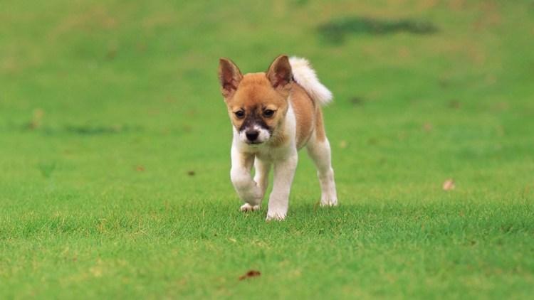 Nice Dog On The Green Grass 4k Wallpaper