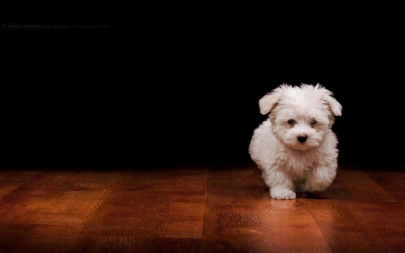 Nice Little Dog On The Wooden Land Full Hd Wallpaper