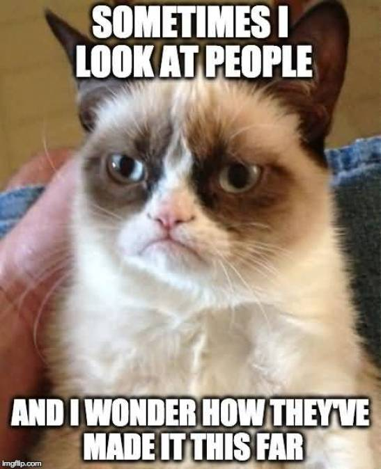 Sometimes I Look At People And I Wonder How Theyve Made It This Far Grumpy Cat Memes Figure