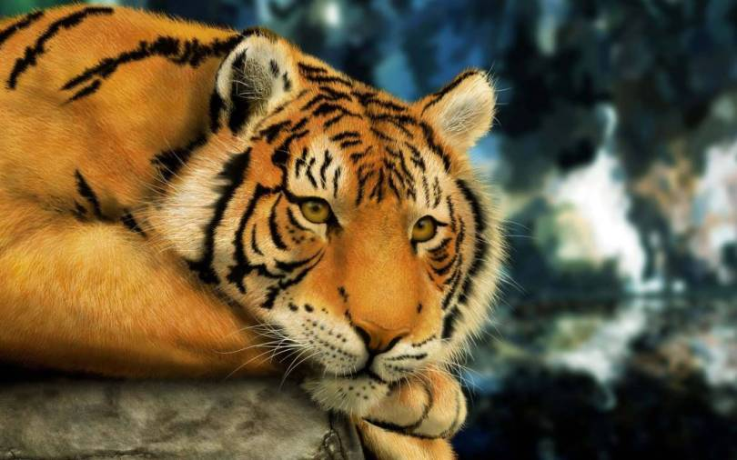 Stunning Tiger Seems Sad full HD wallpaper