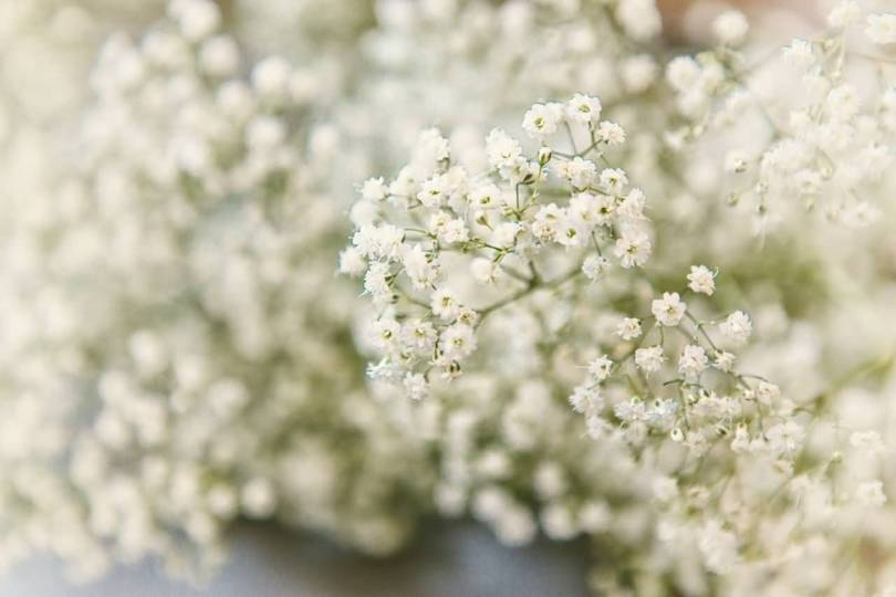 Stunning White Baby's Breath Flowers For Decoration