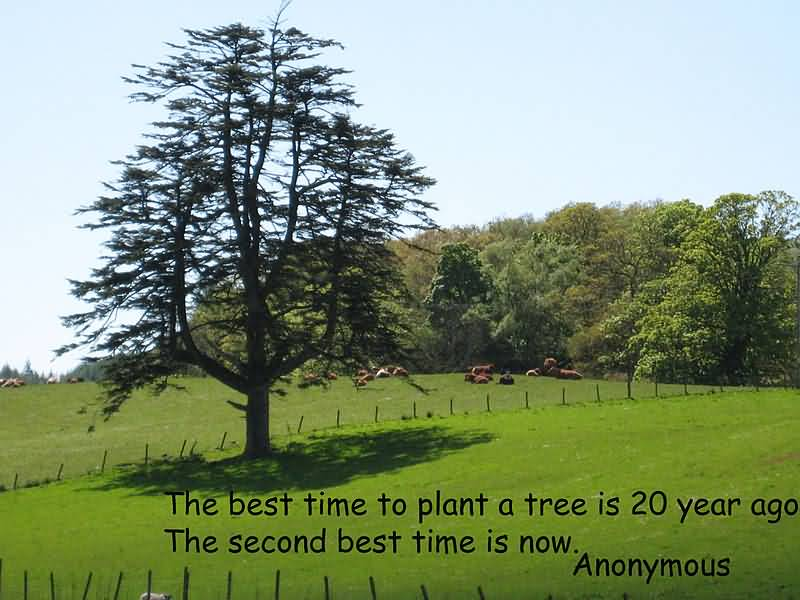 The best time to plant a tree was 20 years ago. The second best time is