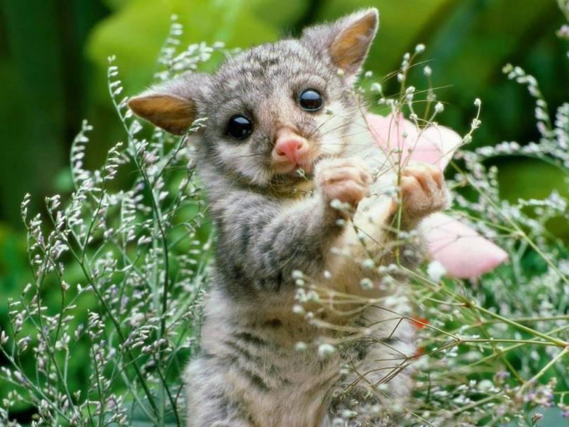 Very Cute Wombat Baby 4k Wallpaper