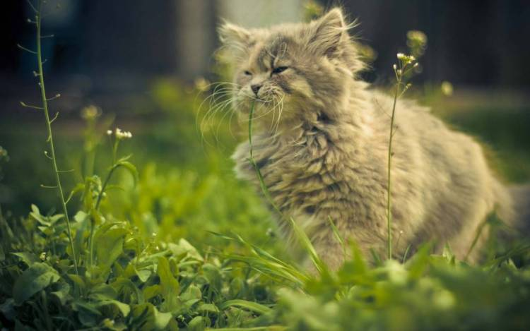 Very Incredible Cat Amid The Green Grass HD 4K Wallpaper
