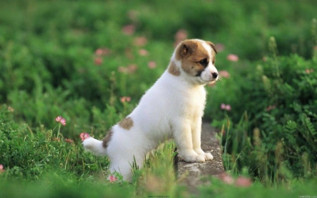 Very Nice Dog In The Field Full Hd Wallpaper