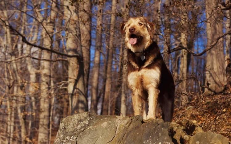 Wonderful Dog Standing In The Woods 4k Wallpaper