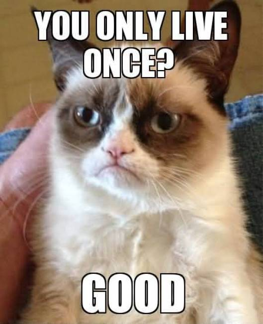 You Only Live Once Good Grumpy Cat Memes Photo