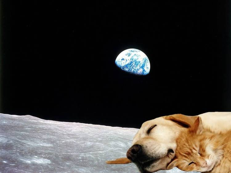 Amazing Wallpaper Dog And Cat On The Moon