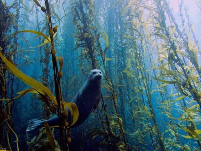Amazing Underwater Animal Hd Wallpaper
