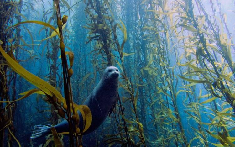 amzing-underwater-animal-hd-wallpaper