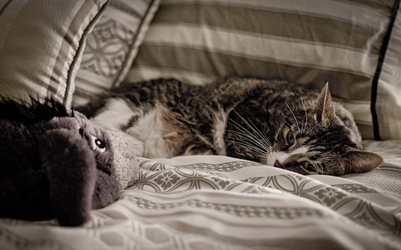 cute-cat-seems-sad-on-bed-full-hd-wallpaper