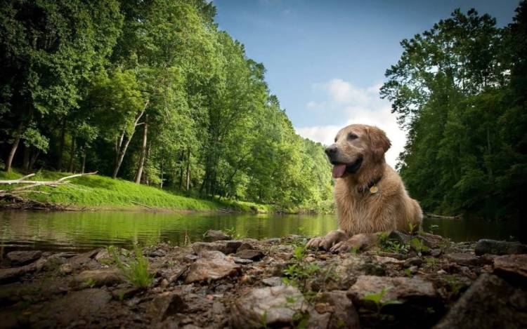 Cute Nice Dog In The Picturesque Woods Full Hd Wallpaper