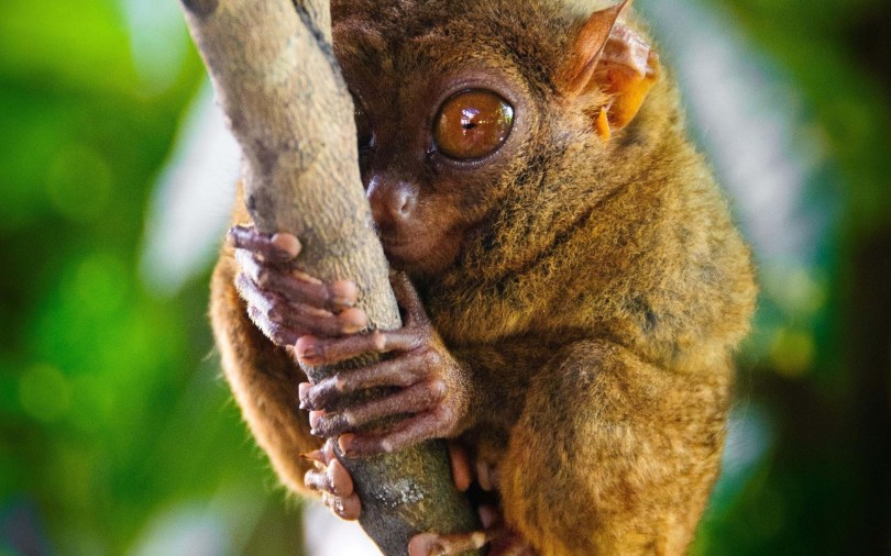 cute-with-tree-tarsier-full-hd-wallpaper