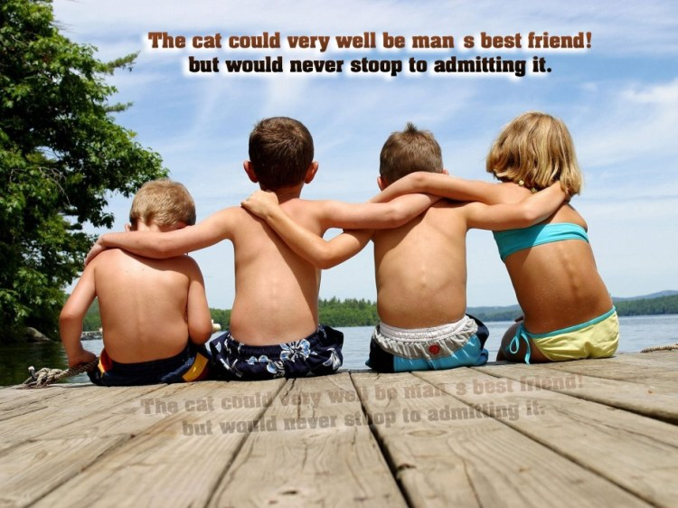 the cat could very well be man s best friend but would never stoop to admitting it.