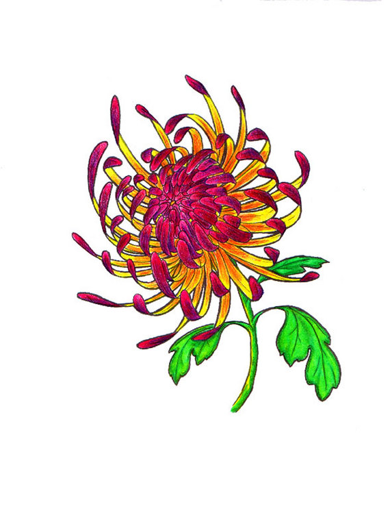Adorable Green Red And Black Color Ink Chrysanthemum Tattoo Design For Girls