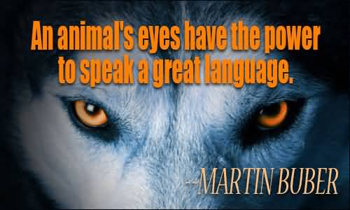 Animal Quotes An animal's eyes have the power to speak a great languages Martin Buber (2)