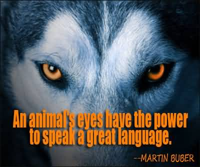 Animal Quotes An animal's eyes have the power to speak a great languages Martin Buber